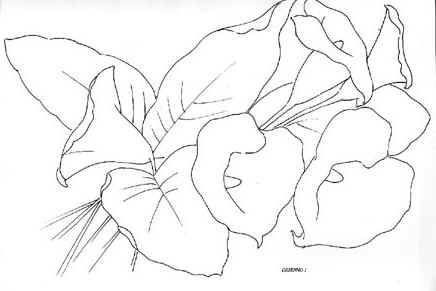 Dibujos para colorear de alcatraces - Imagui