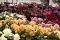 Flores en viveros