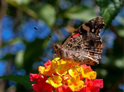 de Fotograf > Imágenes de Grupo de Fotograf > Mariposa de colores