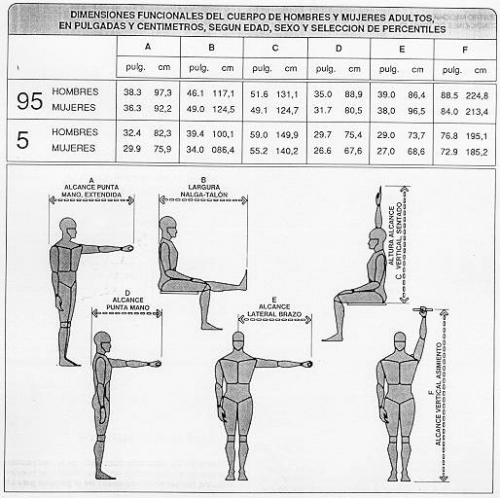 imagen medidas del cuerpo humano ForMedidas Ergonomicas Del Cuerpo Humano